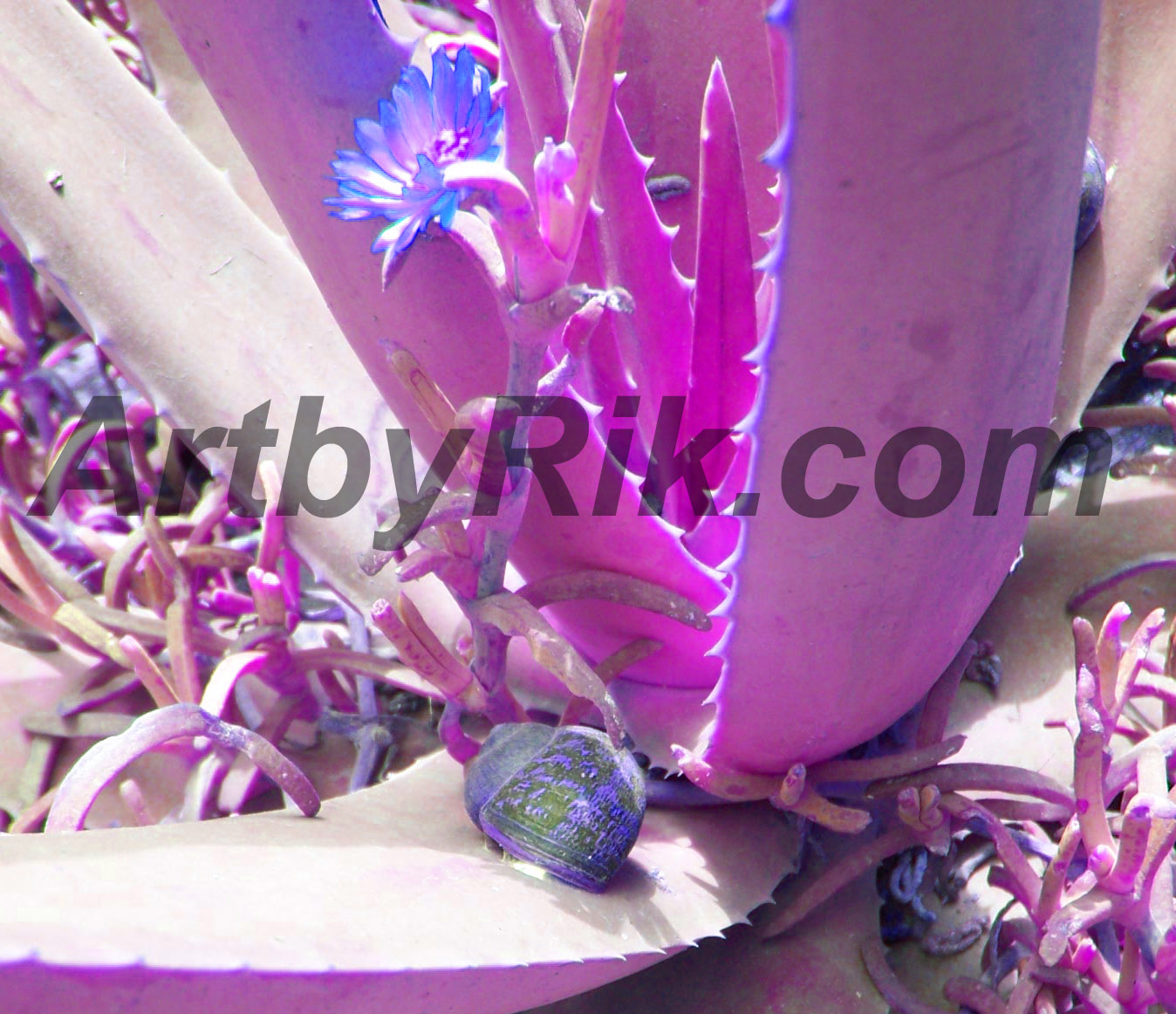 Purple cactus art with snail